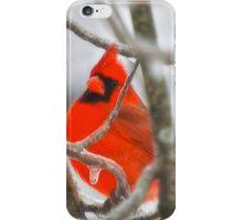 Red Northern Cardinal Birds iPhone Case/Skin