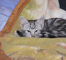 Loki - Mew-ster of all he surveys by Sandra Chung