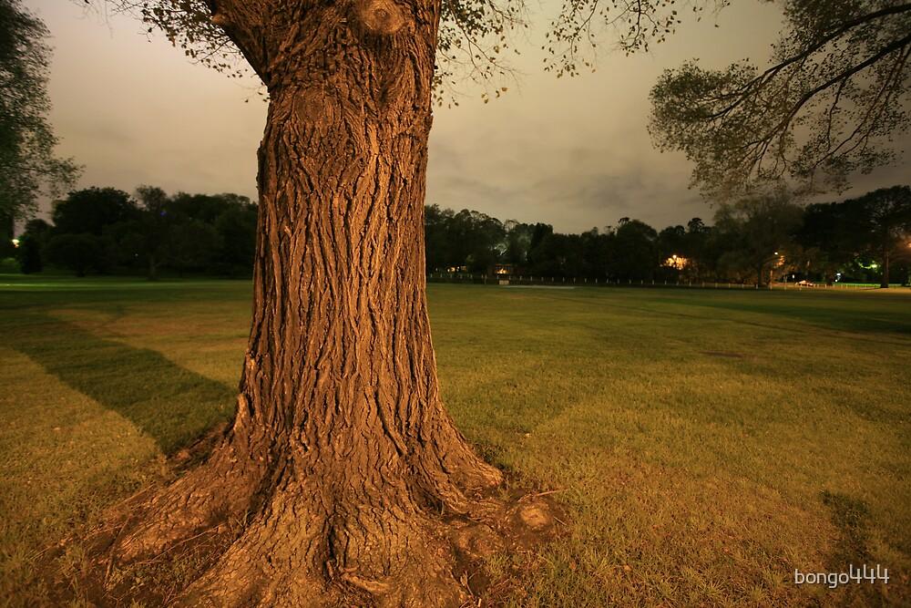 Tree Near Shrine by bongo444
