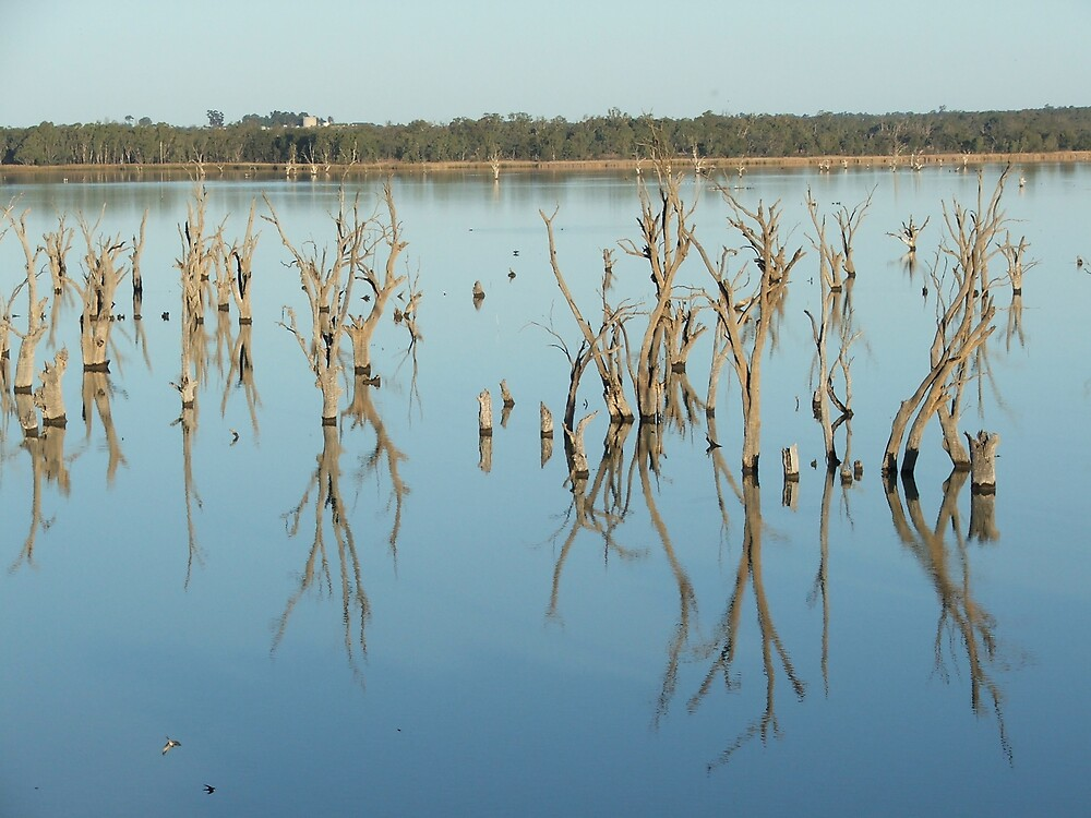dead trees in water by simonsinclair