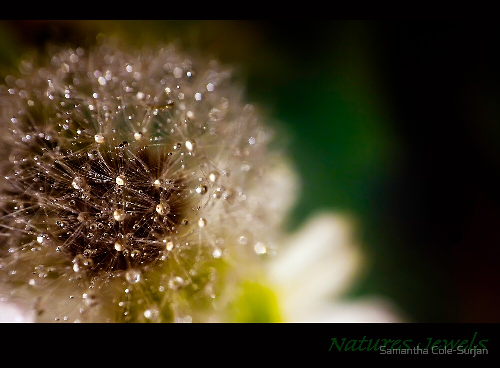 Natures Jewels by Samantha Cole-Surjan