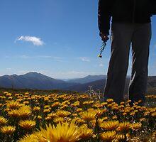 Feathertop Flower by bongo444