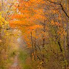 Pathway To Autumn_1 by sundawg7