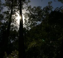 Tree in the Blue Mountains, Sydney by bevan