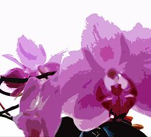 pink orchids by phillipa