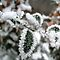 Frosty Plant (close up photos please) - 2nd of January