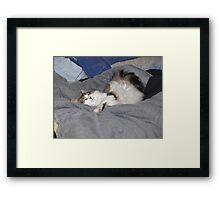Keito, the Boneless cat Framed Print