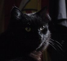 virgils cat by virgil