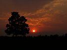 _Goodnight Sun_ by InfinityRain