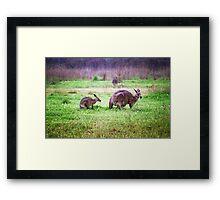Soggy Roos Framed Print