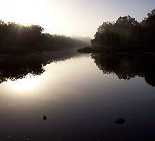 Morning fog by dodgsun