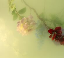 Flowers Underwater by elenakulikova