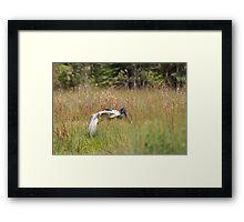 Jabiru Yoga Framed Print