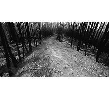 burnt track Photographic Print