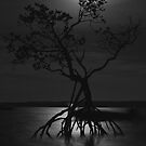 Moonlit Mangroves by Craig Scarr