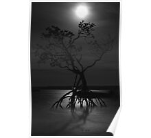 Moonlit Mangroves Poster