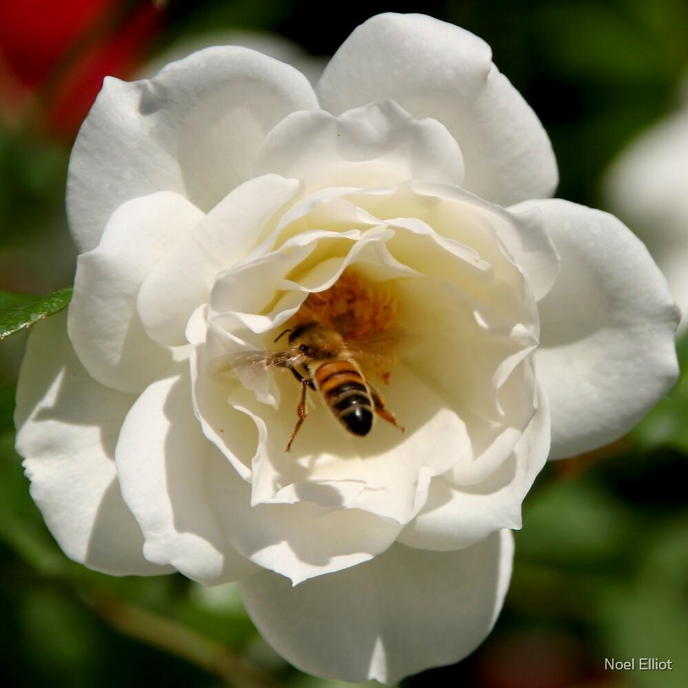Busy Bee by Noel Elliot