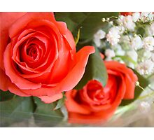 Soft red roses Photographic Print