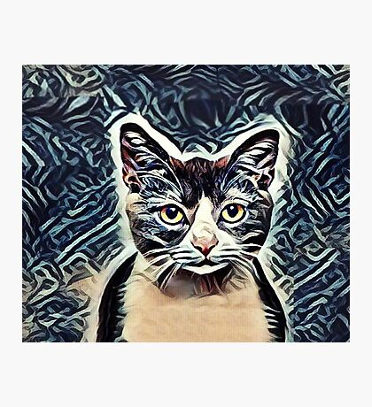 The Calico Cat Photographic Print