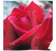 Rose Petals 2 Poster
