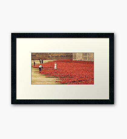 Flanders` Poppy in London Framed Print