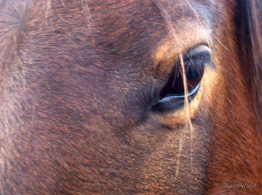 Bronty's eye by Sharna Wood