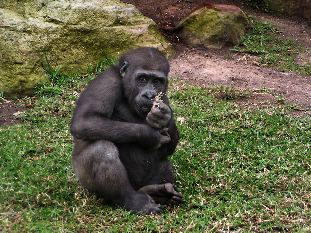 Baby Gorilla by nattynoogie