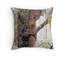 Koala in Wet Forest Throw Pillow