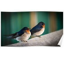 Welcome Swallow Poster