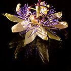 Passionfruit Flower by bettyb