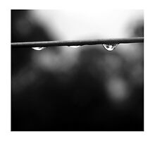 Drops by Bryant Evans