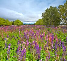 Lupin River by Neil