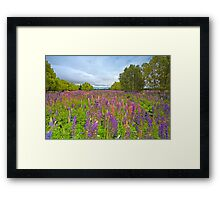 Lupin River Framed Print