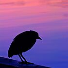 Sunset Silhouette by Mary Broome