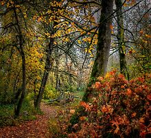 Fall on the River by Charles & Patricia   Harkins ~ Picture Oregon