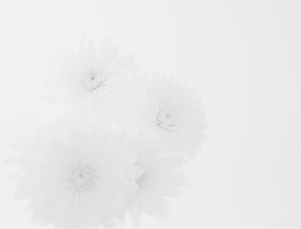 white petals by Andrew Wilson