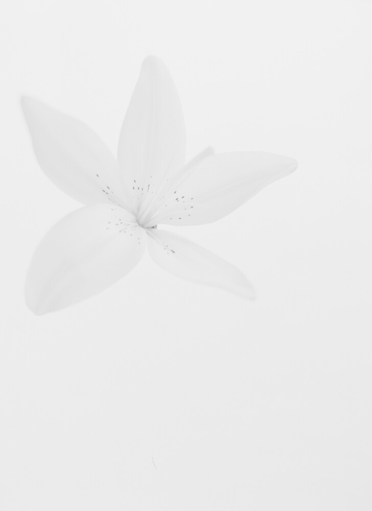 White Flower by Andrew Wilson