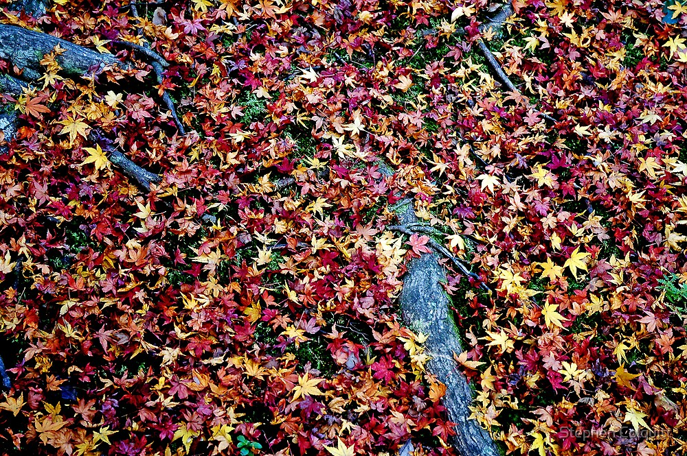 Carpeted by Stephen Colquitt
