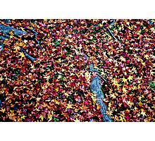 Carpeted Photographic Print