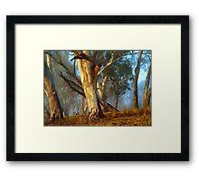 River Gums Framed Print