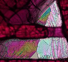 Ninhydrin crystals under polarised light by Michael Dingley