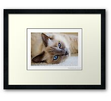 Birman Framed Print