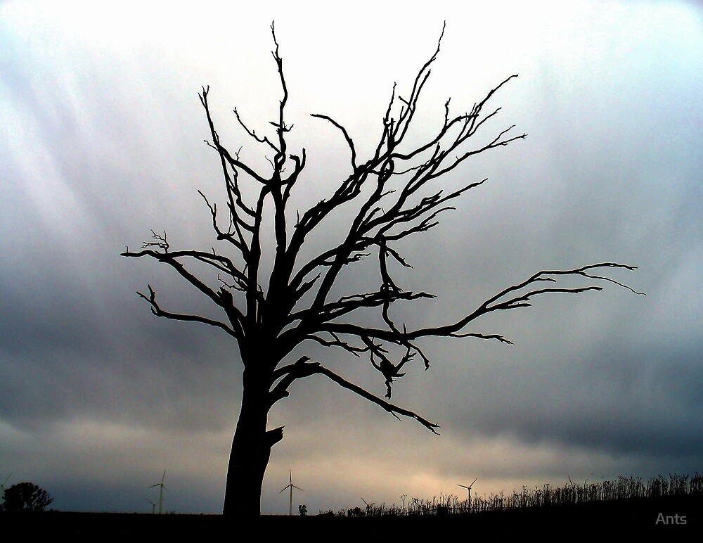 lone tree by Ants