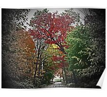 Vivd Autumn Lane Tunnel Vision Poster