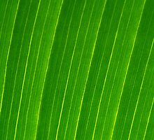 Palm Leaf by Stuart Hazeldine