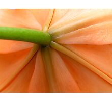 Under Lily Photographic Print