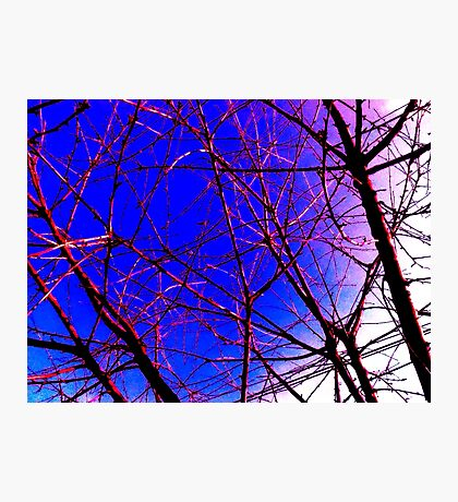 Colorful Red and Blue Bough Design Photographic Print