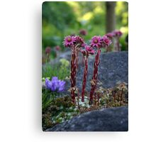 Standing Tall when the World is Small Canvas Print