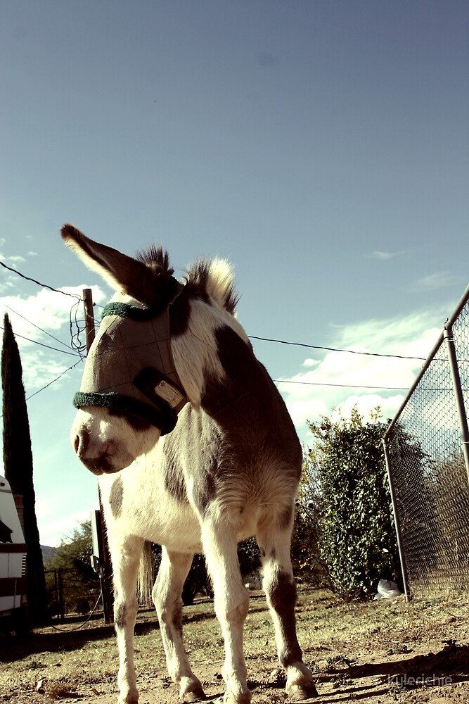 yes, that's a donkey. by kylerichie
