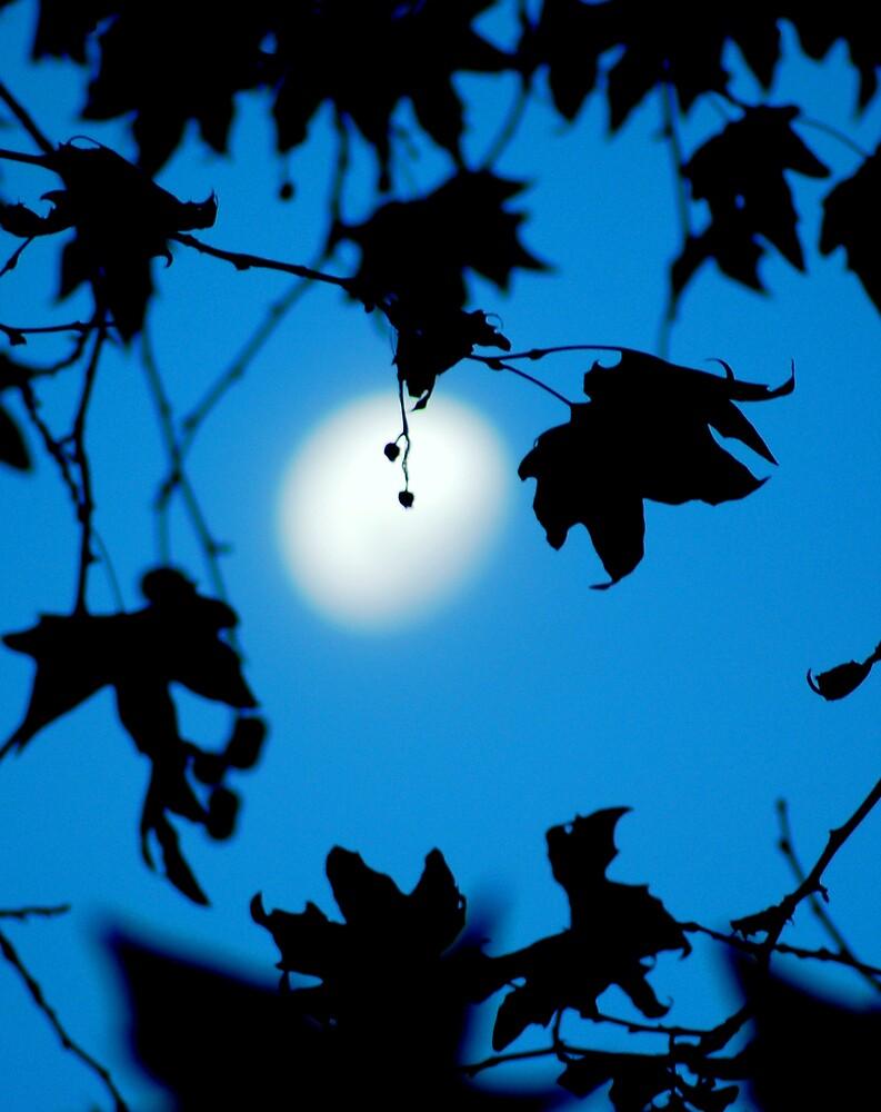 Good Moon Rising by Fiona  Braendler